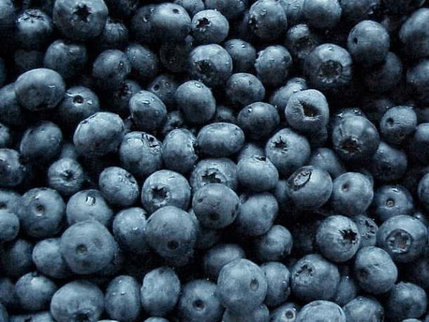 blueberries_earlyblue